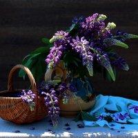 Любителям  лиловых красок :: Наталья Казанцева