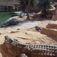 Крокодиловое царство :: Алексей Корзников