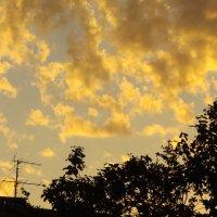 вечерний пейзажъ :: валя елисеева