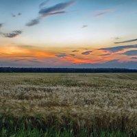 рассвет над хлебным полем... :: юрий иванов