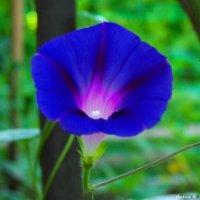 Цветок, встречающий рассвет..) :: Любовь К.