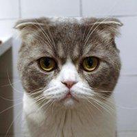 Тёма...хороший кот :: Елена