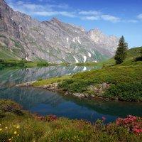 звезды лета - альпийские розы :: Elena Wymann