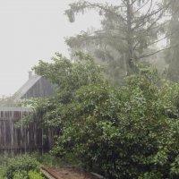 Снимаем дождь :: Константин Сафронов
