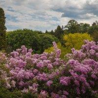 «…Предстал восторженному взору Иной пейзаж, уже весенний…» :: Андрей Нибылица