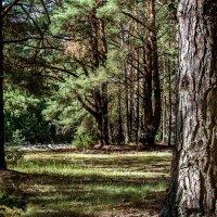 В лесу. :: Владимир Фисенко