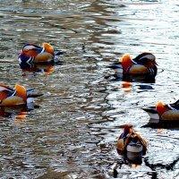 Немного красок в ледяной воде :: Valentina M.