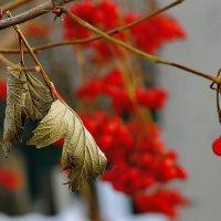 ..осенняя листва :: Георгий Никонов