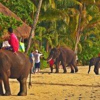 Нашествие слоников :: Дмитрий Боргер