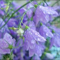 В капельках дождя :: Лидия (naum.lidiya)