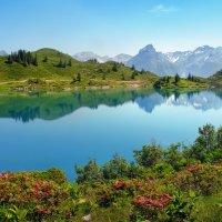 рододендрон - альпийская роза :: Elena Wymann