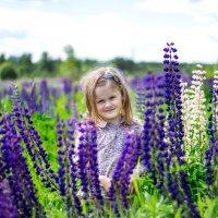 Летний денёк  в люпиновом поле :: Ирина Ашутова