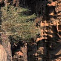 В пустыне Вади рам :: Дмитрий Воронин
