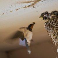 Ласточкино гнездо. :: Сергей Басов