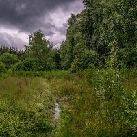 Перед дождём 2 :: Андрей Дворников