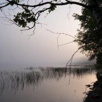 Утренний туман на разливе :: Злата Красовская
