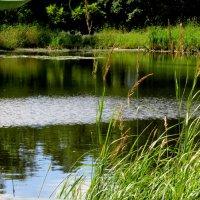 На душе и радость и покой, хорошо в гостях быть у природы... :: Светлана