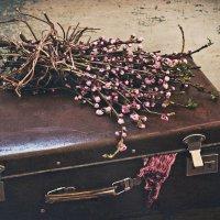 Собирает весна чемоданы :: Ольга Мальцева