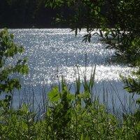 Утреннее солнышко в озере купается :: Маргарита Батырева
