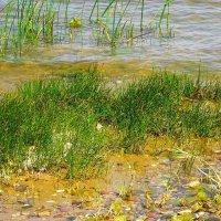 На берегу залива, практически на голом песке, растёт островок травы :: Маргарита Батырева
