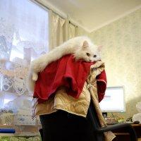 Меховой подголовник из натуральной кошки :: Сергей Ткаченко