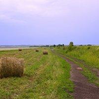 поле поле :: Настасья