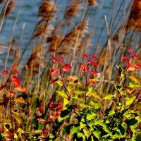 флора у озера :: Александр Прокудин