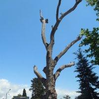 Дерево без листьев :: Мила