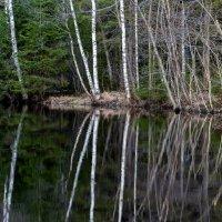 Лесное озеро. :: Владимир Лазарев