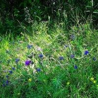 Луч солнца полянку озорил и высветил картинку лета :: Маргарита Батырева