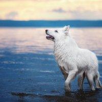 Почти волк :: Олеся Еремеева