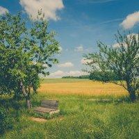Забытая скамейка :: Waldemar .
