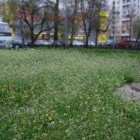 Городской пейзаж пасмурный :: Анна Воробьева