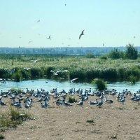 Птичий базар :: Николай Танаев