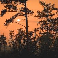 Изнывающие от пожаров леса Сибири :: Александр Колесников