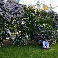 сирень в Санкт-Петербурге :: Alexandr Yemelyanov