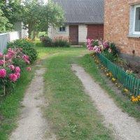 Mano kaimynas / My neighbour :: silvestras gaiziunas