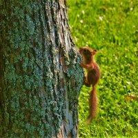 Маленький рыжик... :: Sergey Gordoff