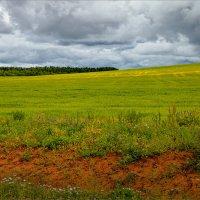Летний пейзаж, полуденный... :: Александр Никитинский