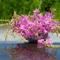 Когда цветёт кипрей. :: nadyasilyuk Вознюк