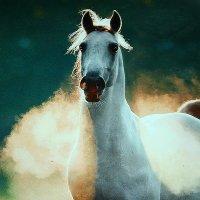 Белая лошадь в лучах рассвета :: Любовь Потравных