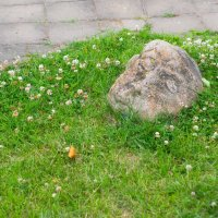Древние камни :: Alyes Kukharev