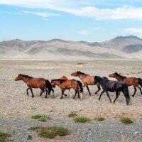 Монголия. :: Ирина Токарева