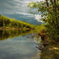 Прогулка по берегу реки :: Денис Сидельников
