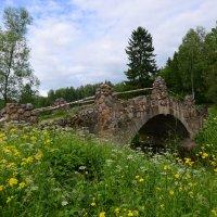 Мост в Павловском парке :: Наталья Левина