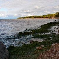 У Финского залива-4 :: Валентина Папилова