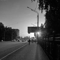 Закат и тополя :: Илья Ильин