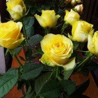 Розы желтые :: Анна Воробьева
