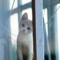 Kitten :: Олег Шендерюк
