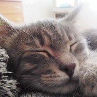 Спящий котёнок :: Владимир Ростовский